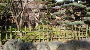 垣根の竹 (3)