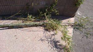 垣根の竹 (2)