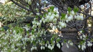 春の芽吹き (8)