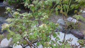春の芽吹き (4)