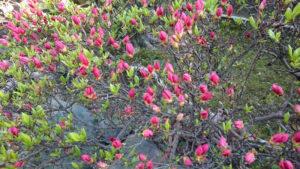 春の芽吹き (6)
